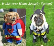 Home Security Dogs Funny